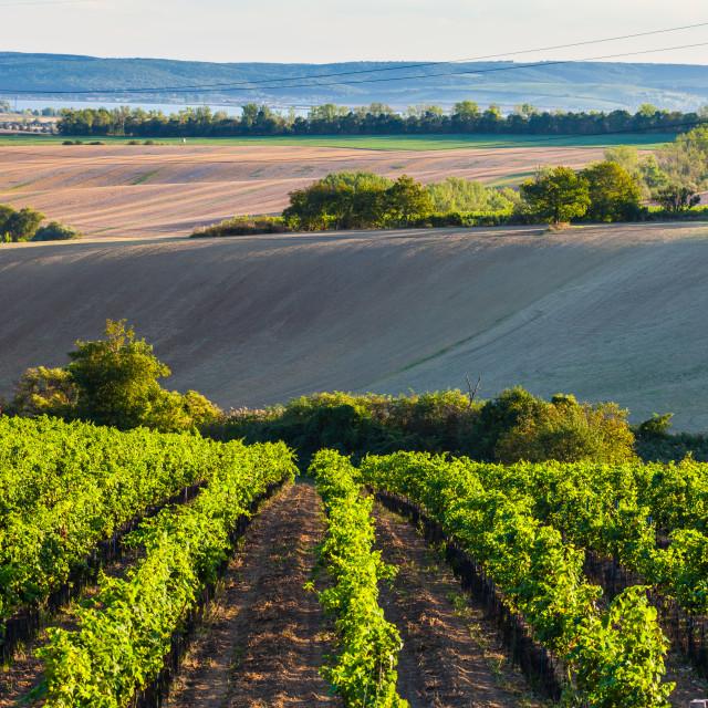 """Landscape of South Moravia"" stock image"