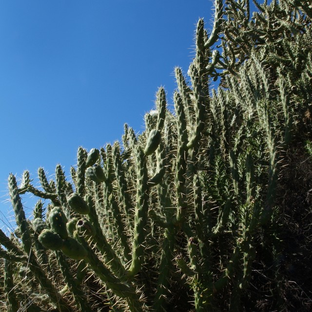 """Cactusi"" stock image"