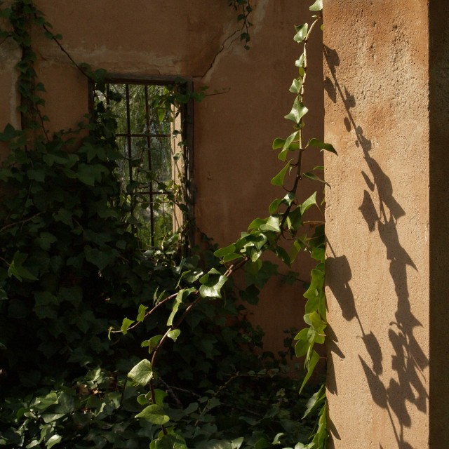 """""""House With Ivy"""" stock image"""