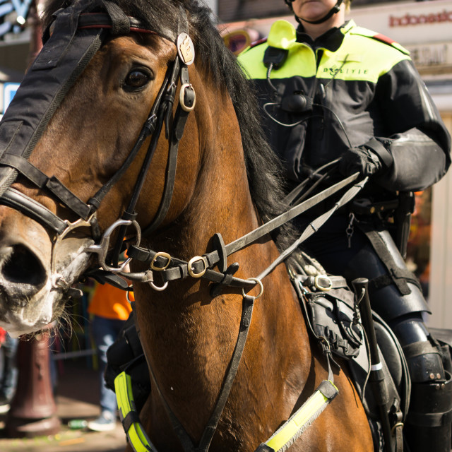 """Police Horse"" stock image"