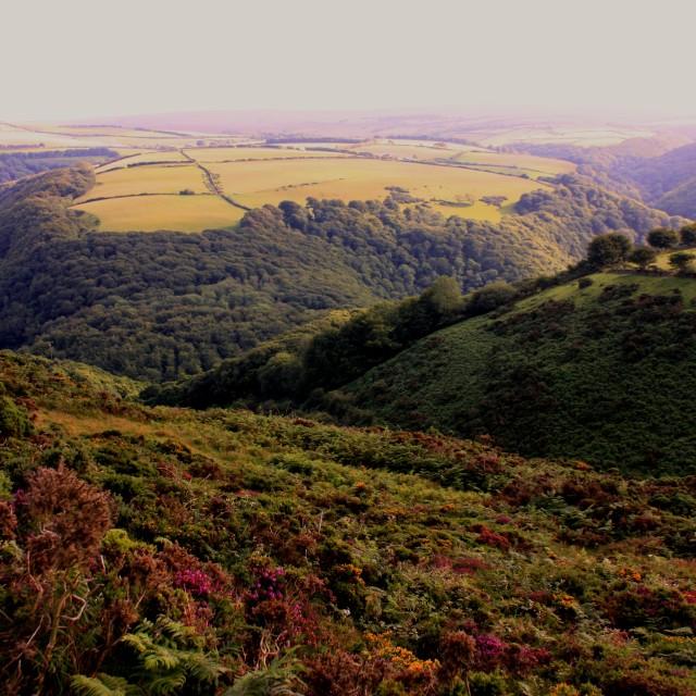 """""""Exmoor Beauty"""" stock image"""