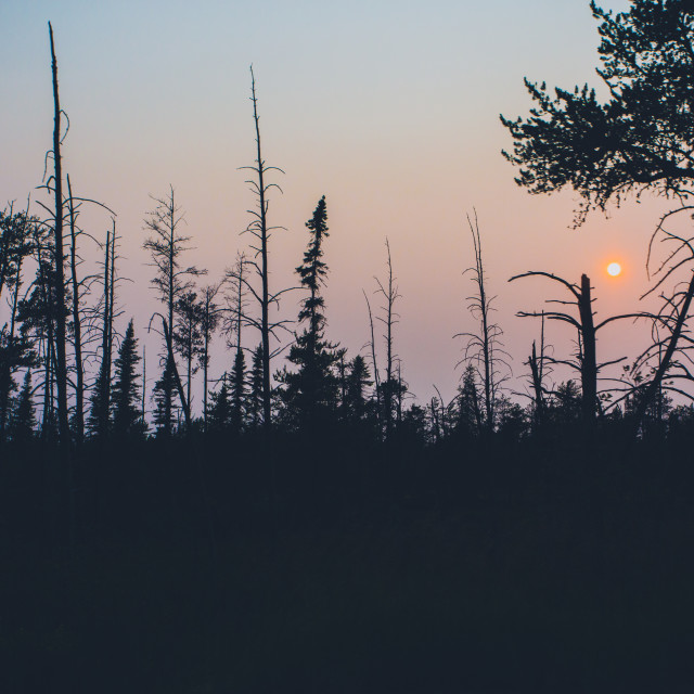 """""""Trees in Sunset"""" stock image"""