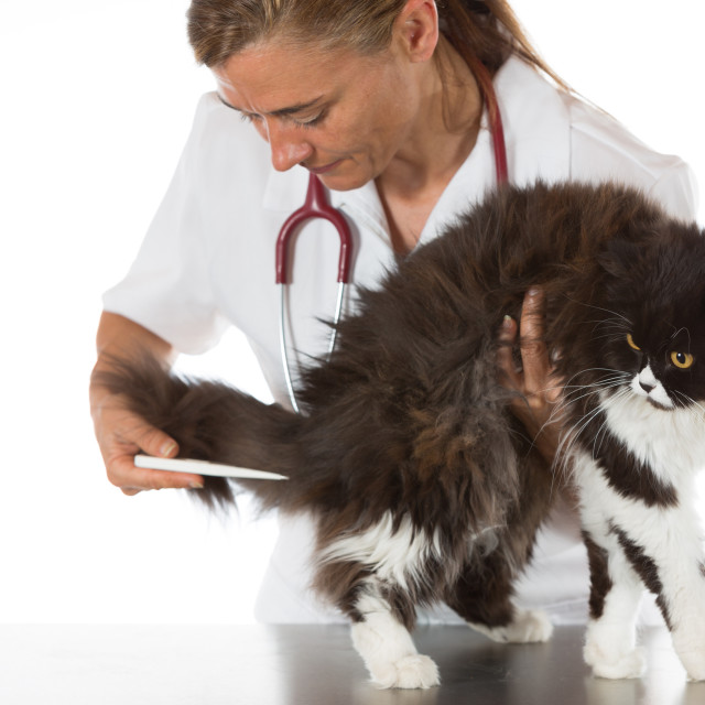 """Veterinary clinic with a kitten"" stock image"