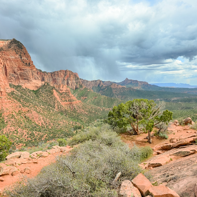 """Kolob Canyons, Timber Creek Trail, Zion National Park, UT"" stock image"