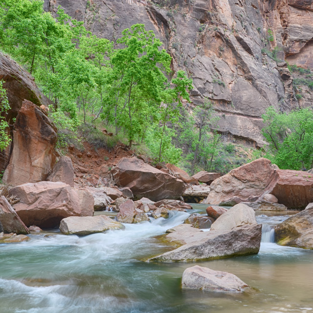 """Virgin River. Riverside Walk, Zion National Park, UT"" stock image"