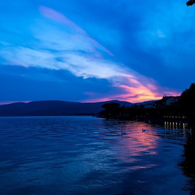 """Sunset swans"" stock image"