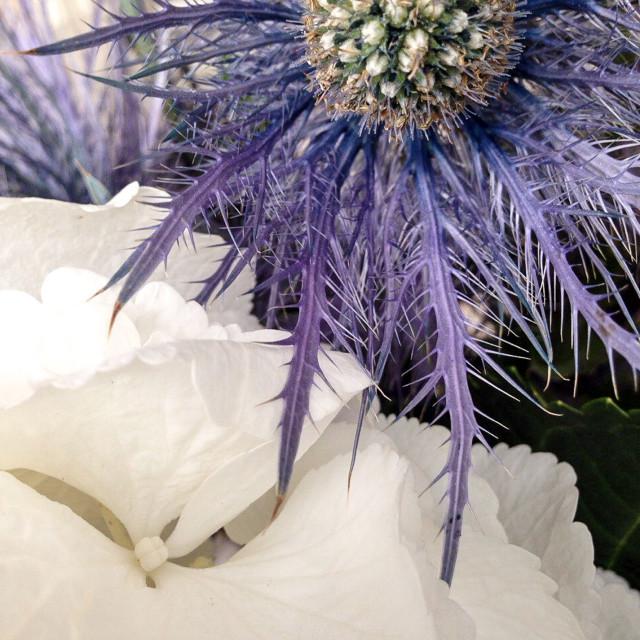 """Decorative Flowers"" stock image"