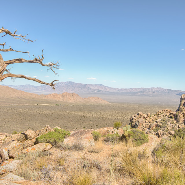 """Tree Snag, Teutonia Peak Trail, Mojave National Preserve, CA."" stock image"