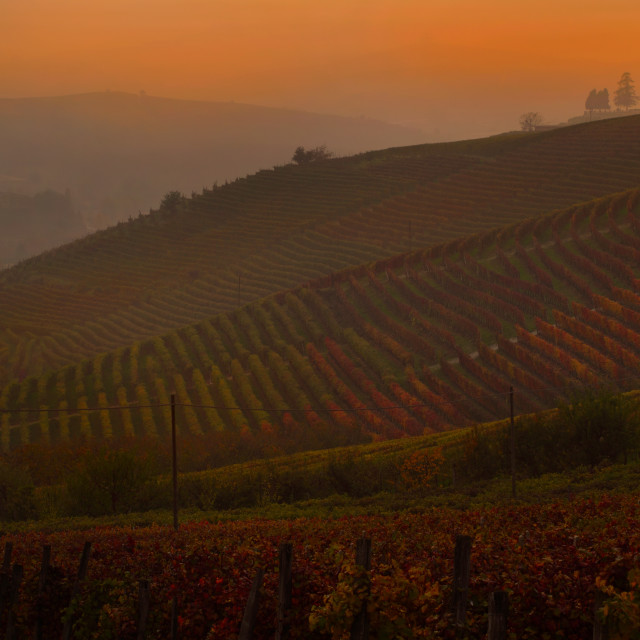 """Autumn on the Langhe"" stock image"