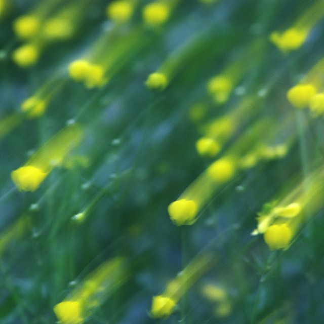 """""""Lot of yellow flowers blured"""" stock image"""