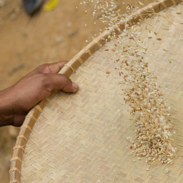 """""""Rice and Chaff"""" stock image"""