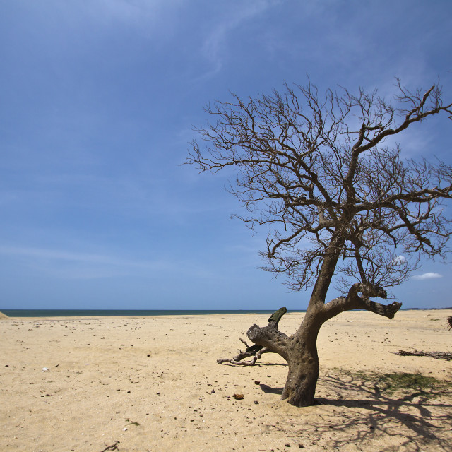 """Kokkilai nature réserve of Sri Lanka"" stock image"