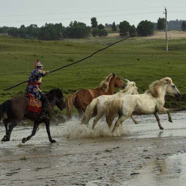 """""""Saddle horses"""" stock image"""