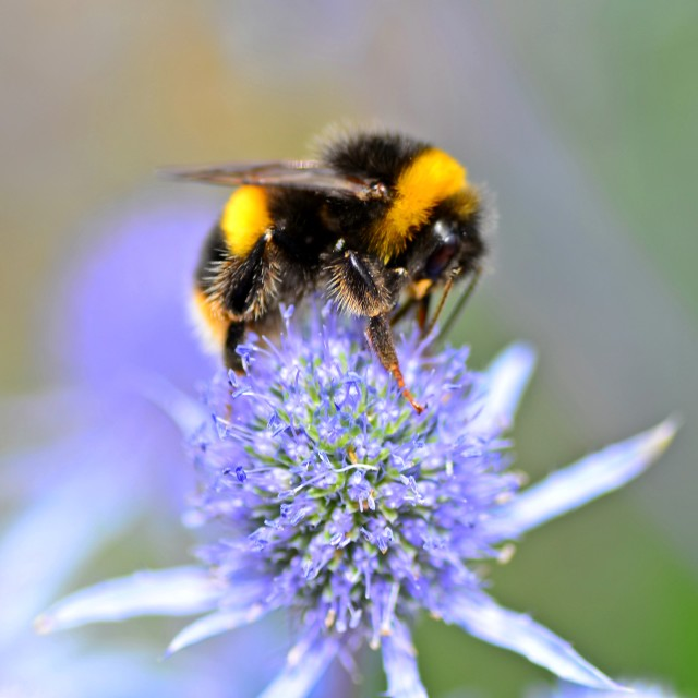 """Bumble bee"" stock image"