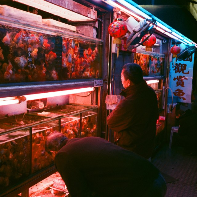 """Goldfish Market, Hong Kong"" stock image"