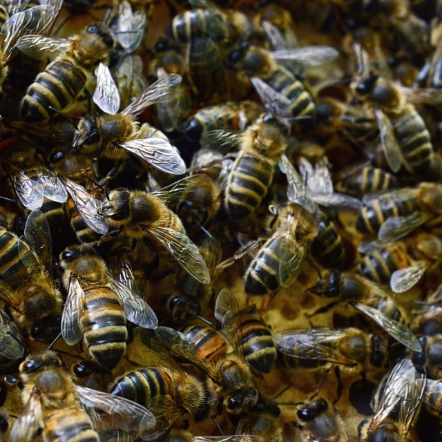 """Bees 2 feasting"" stock image"