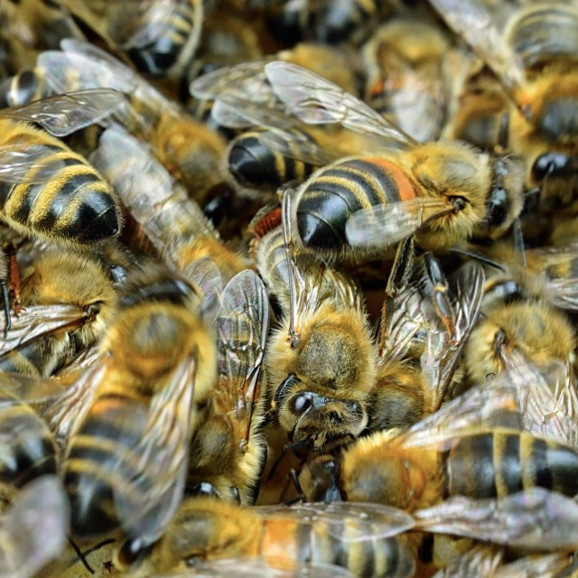 """Bees 10"" stock image"
