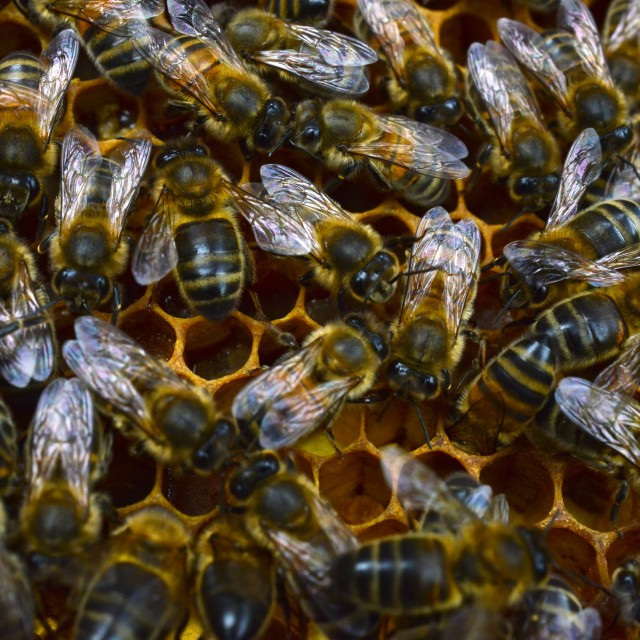 """Bees 4 honeycomb"" stock image"