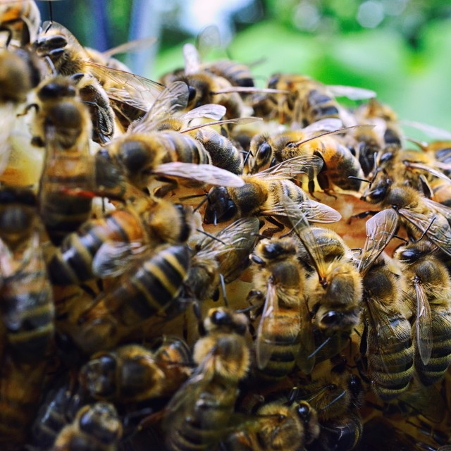 """Bees 3 edge of the hive"" stock image"