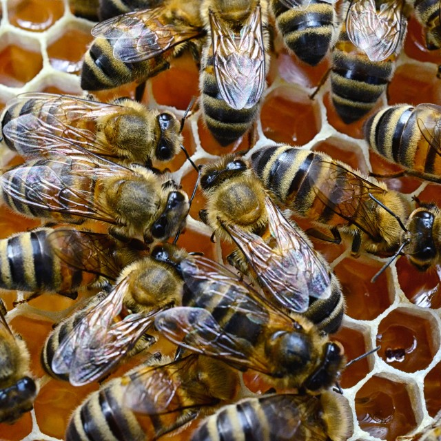 """Bees 14 close up"" stock image"