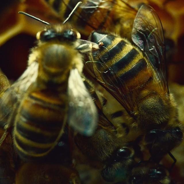"""""""Bee 23"""" stock image"""