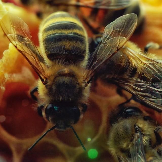 """""""Bee 21"""" stock image"""