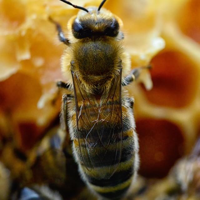 """""""Bee 24"""" stock image"""