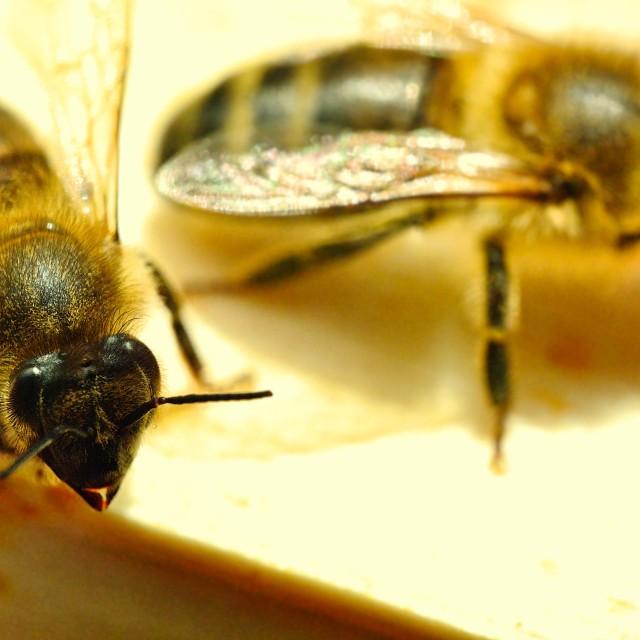 """""""Bee 20"""" stock image"""