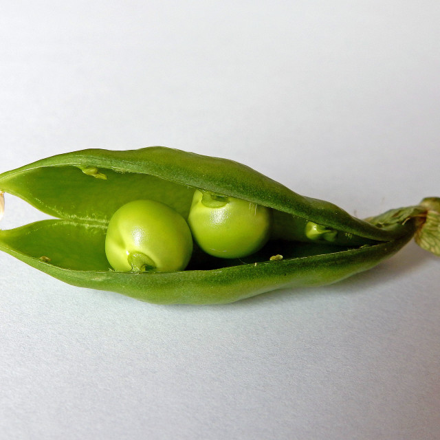 """""""Two peas in a pod"""" stock image"""
