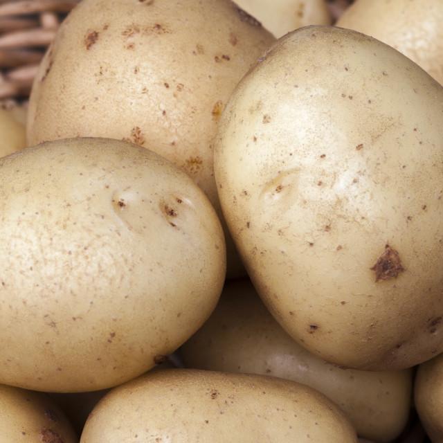 """New potatoes Casablanca"" stock image"