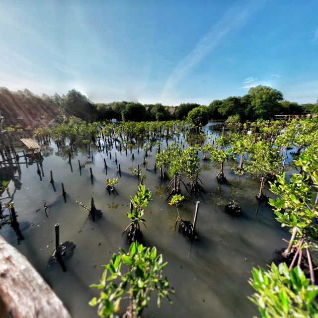"""Mangrove Space"" stock image"