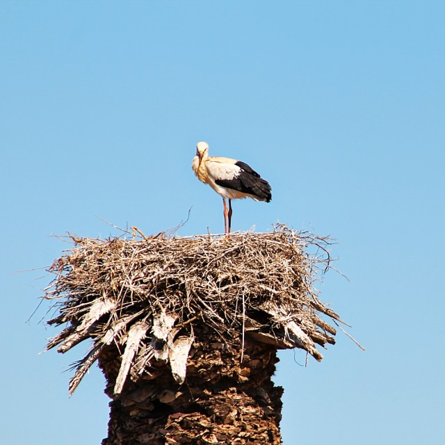 """""""in the nest"""" stock image"""