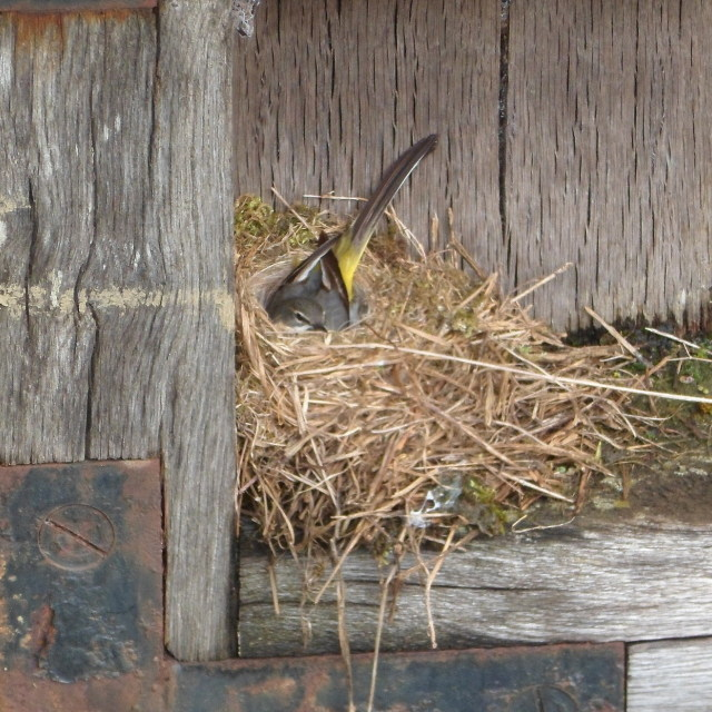 """Nesting bird"" stock image"