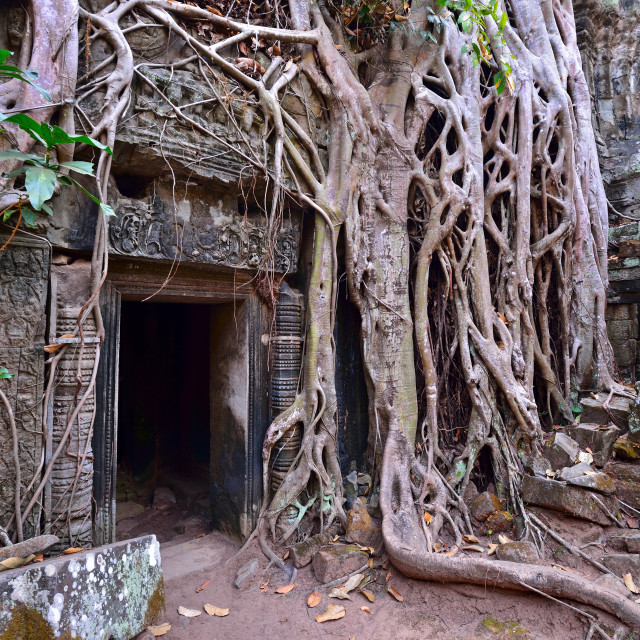 """Ta Prohm temple ruins and tangled tree roots in Angkor"" stock image"