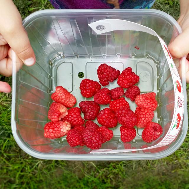 """Raspberry picking"" stock image"