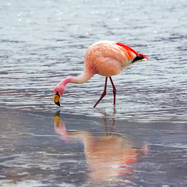 """""""Flamingo in Icy Water"""" stock image"""