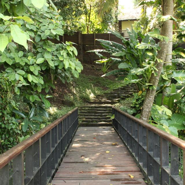 """Green bridge"" stock image"