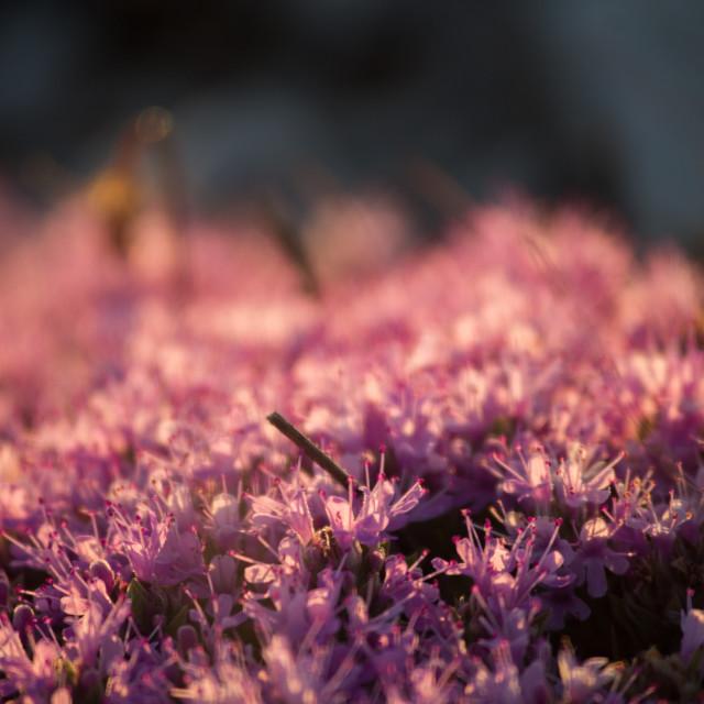 """Floral carpet"" stock image"