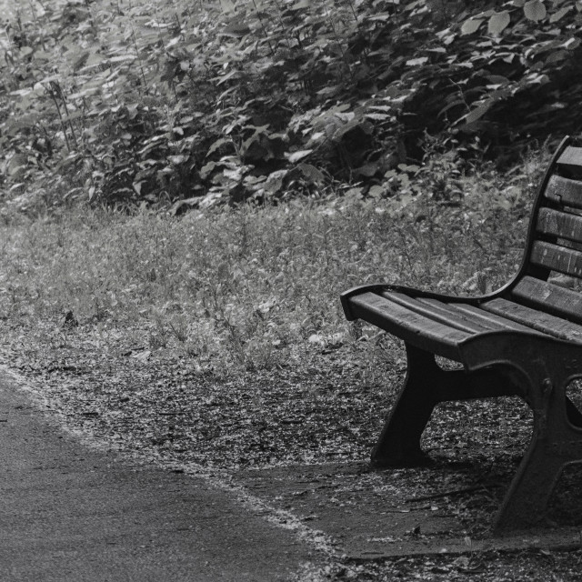 """""""The Old Park Bench"""" stock image"""