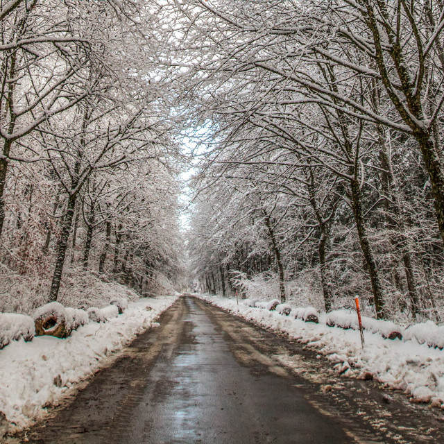 """Winter Road"" stock image"