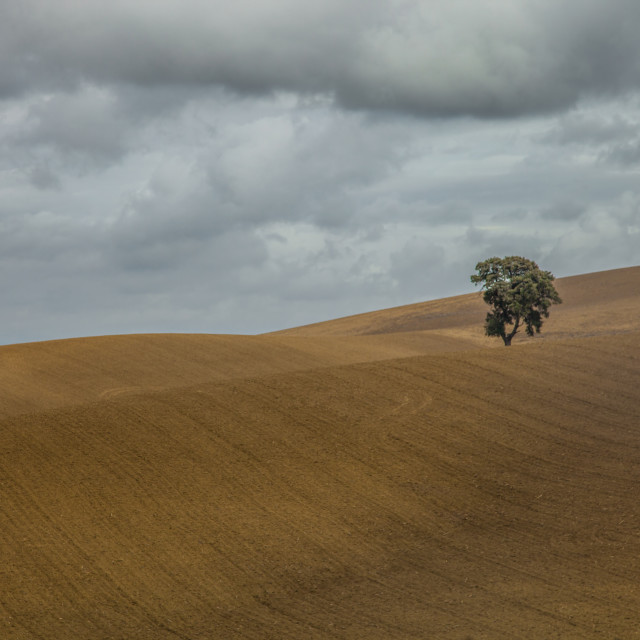 """A Lonely Tree"" stock image"