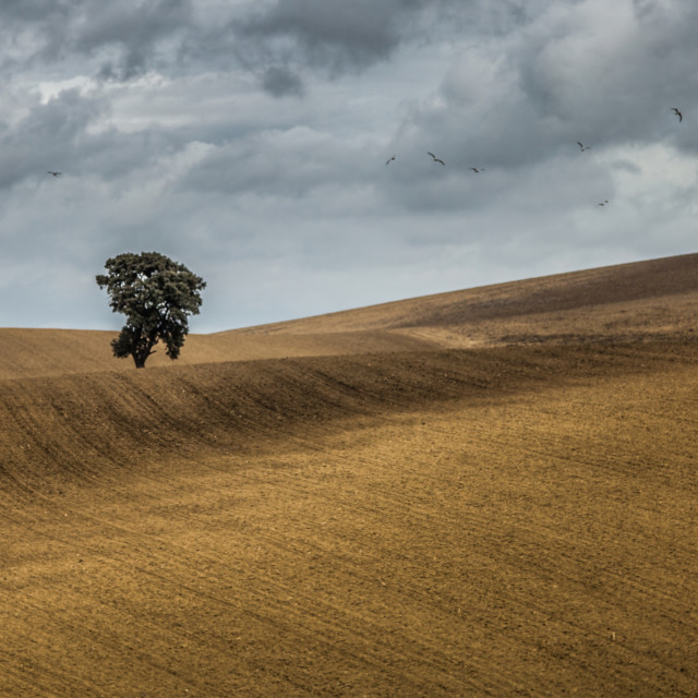 """""""A Lonely Tree"""" stock image"""