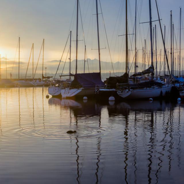 """Sailboats And The Rising Sun"" stock image"