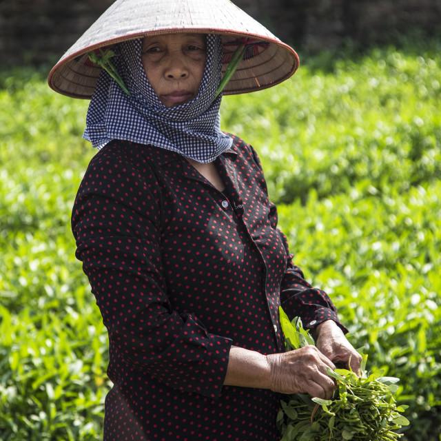 """Lady farmer."" stock image"