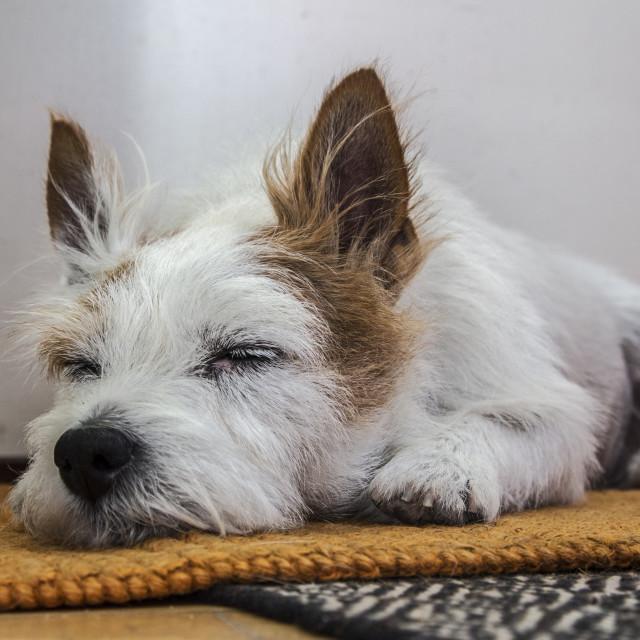"""""""Morris sleeps"""" stock image"""