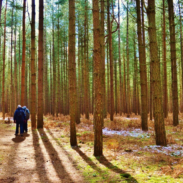 """""""Walking in the Forest."""" stock image"""