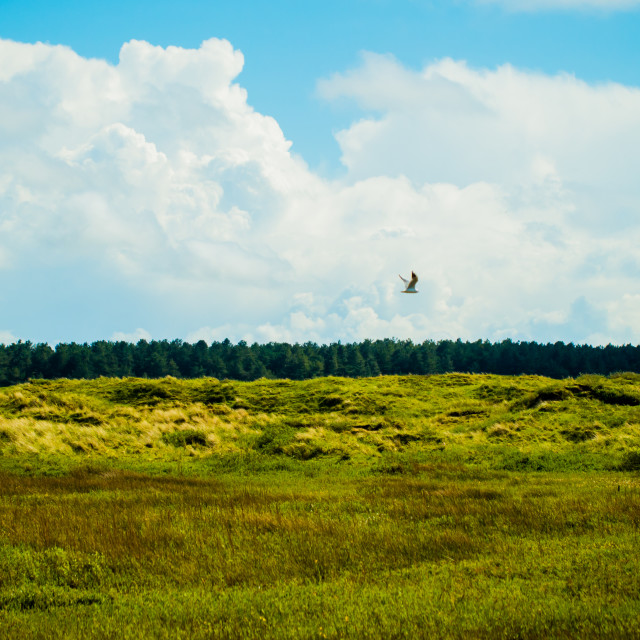 """Ainsdale dunes"" stock image"