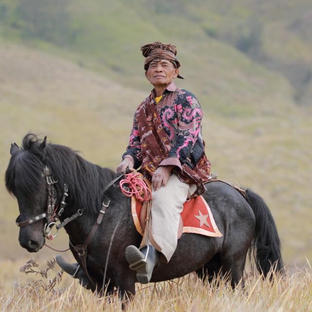 """Portrait of a horseman"" stock image"