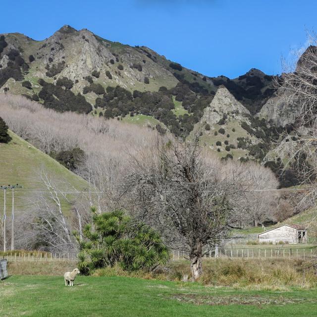 """""""New Zealand hill farm"""" stock image"""