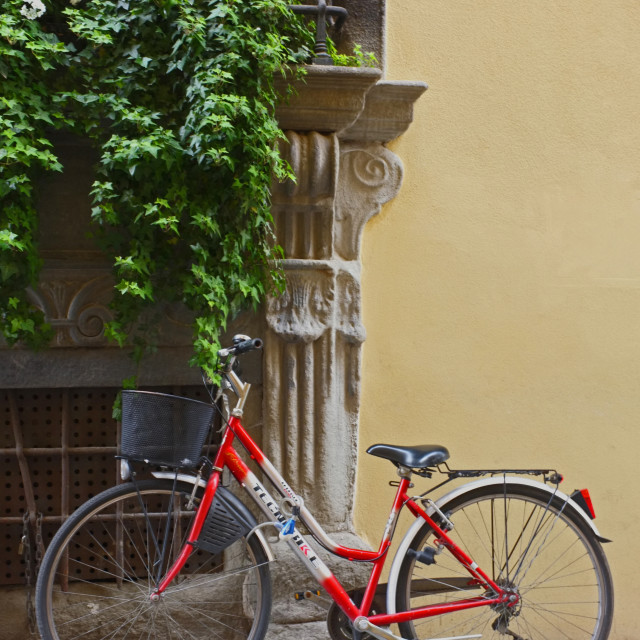 """Bicycle with Shruberry"" stock image"